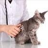 Ветеринарные клиники в Кировграде